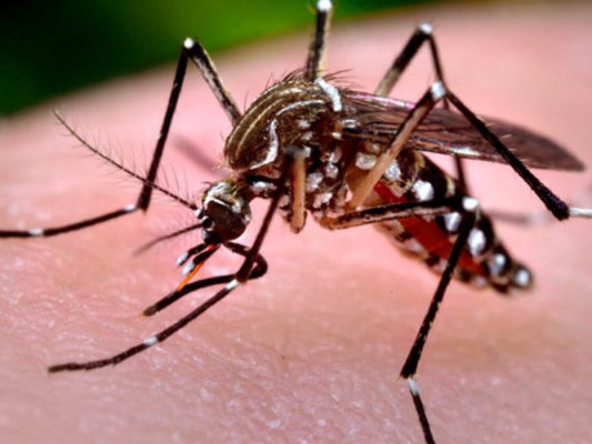 zika-aedes